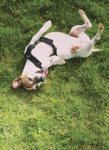10 Ways To Add More Joy To Your Dog S Life Your Dog Dogs Dog Life