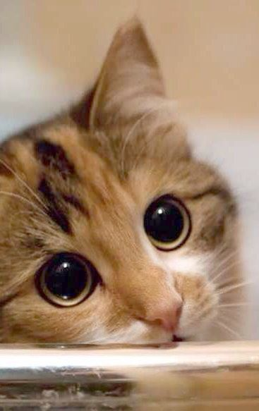 What Darling Eyes Beautiful Cats Kittens Cutest Cute Cats