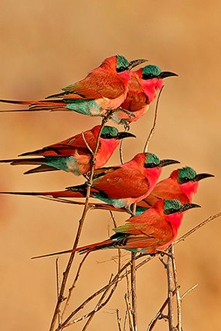 Google Image Result for http://www.leawo.com/free-resources/lib/upload/ipod-iphone-wallpapers/Animals/red-bird.jpg