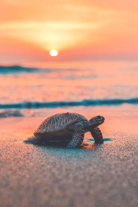 Baby Animals Super Cute, Cute Little Animals, Cute Funny Animals, Baby Sea Turtles, Cute Turtles, Turtle Baby, Turtle Love, Baby Animals Pictures, Cute Animal Photos