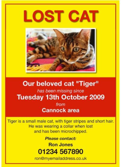 Missing Pet Poster Template Lost Cat Poster Template Losing A Pet