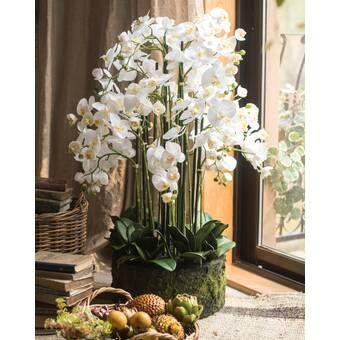 Orchid And Celestite Floral Arrangement In Urn In 2020 Orchid Arrangements Floral Arrangements Orchids
