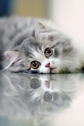 Most Beautiful Cats And Kittens Beautiful Cats Hd Wallpaper Download Cute Animals Pretty Cats Kittens Cutest