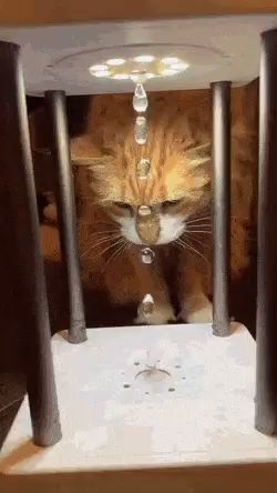 What Is This Sorcery?! 😺💧#funnypetgifs #funny #petgifs #gifs #cats #funnycats #funnycatgifs