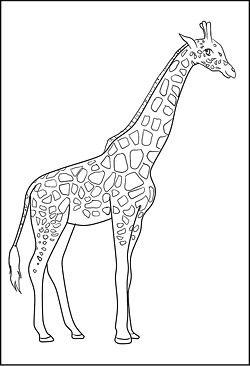Malvorlagen Und Ausmalbilder Von Tieren Zum Kostenlosen Ausdrucken Giraffe Coloring Pages Giraffe Art Giraffe