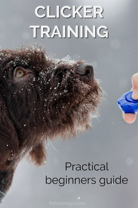 Dog Training Active Collar Zak George Dog Training Videos Dog