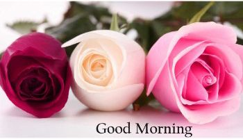 Good Morning Images With Rose Flowers Romantic Rose Orange Pink In 2020 Good Morning Flowers Good Morning Flowers Pictures Good Morning Images Hd