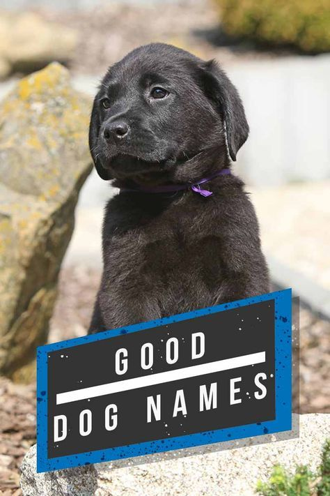 Dog Names The Top Dog Names In 2019 Hundreds Of Awesome Ideas Top Dog Names Best Dog Names Dog Names