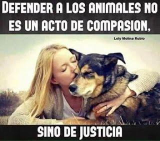 Ave Fenix Argentina Grupo De Registro Unico De Animales Perdidos Enco Perros Frases Fotos De Perros Graciosas Amor De Perro