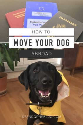 How To Move Your Dog Abroad Moving To Scotland Expat Life Moving