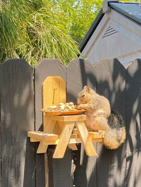 Premium Squirrel Picnic Table - Just added a corn cob, or a bowl of nuts and then enjoy watching the squirrels eat. This is a great way to keep the squirrels out of your bird feeder. Squirrel Feeder Diy, Diy Bird Feeder, Humming Bird Feeders, Carpenter Bee Trap, Summer Crafts For Kids, Corn On Cob, Chipmunks, Yard Art, Bird Houses