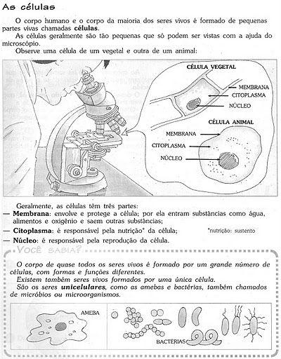 Pin De Nelci Lima Em Ciencias Atividades De Ciencia Ciencias