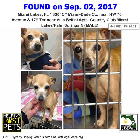 Do You Know This Dog Contact Jvolkrep Bellsouth Net Phone 305 773 5557 Miamilakes Nw 70 Avenue 179 Ter Near Vil Losing A Pet Miami Lakes Dog Photos