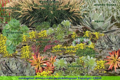 Jardin 20de 20plantes 20grasses 20detail Jpg 1600 1064 Jardin