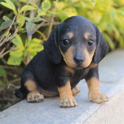 Hi Line Gift Garden Statue 87771 11 Dachshund Puppy Statue