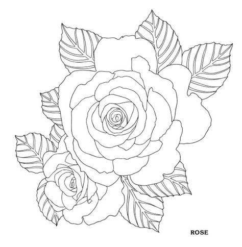 39 Super Ideas For Flowers Drawing Color Dover Publications