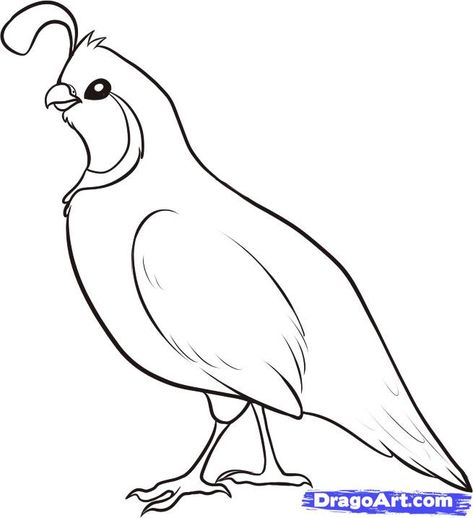 How To Draw A Quail Step 4