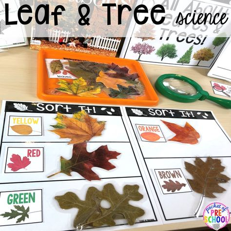 Leaves and Trees SCIENCE! Explore leaves and trees (parts of a tree, types of seeds, sort, measure). Perfect to do in the fall or spring with your preschool, pre-k, or kindergarten students.