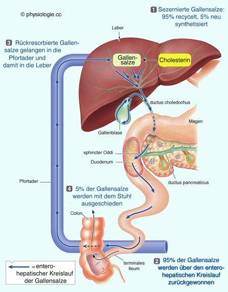 Durch eine Darmspiegelung lassen sich verschiedene Krankheiten am ...