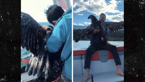 Talk about loving America ... try saving a bald eagle's life on Independence Day, and the dude who did is Canadian!!! Man, they're nice up there.