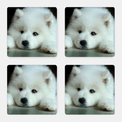 Fluffy White Samoyed Puppy Coaster Set Zazzle Com Pet Supplies Coaster Fluffy Pet Puppy Samoyed Set Supplies White Samoyed Puppy Samoyed Puppies