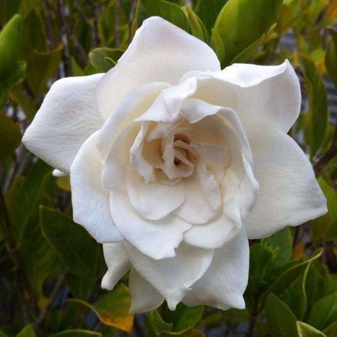 # Blume # Gardina # hübsche # Liebe#blume #gardina #hübsche #liebe