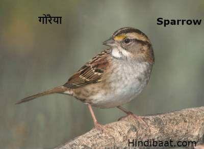 Birds Name In Hindi And English Pakshiyon Ke Naam Birds Hindi Good Morning Inspirational Quotes