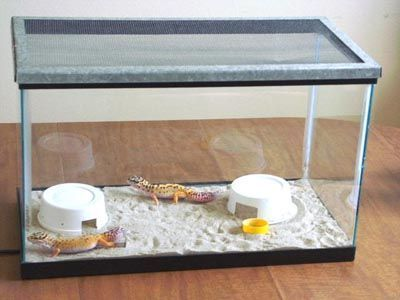 Leopard Gecko Care Sheet Leopard Gecko Leopard Gecko Care Leopard Gecko Habitat