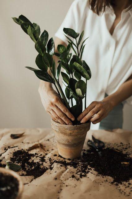 Kochajmy Kwiaty Marzec Najlepszy Czas Na Przesadzanie Roslin Doni Plants Vegetable Planting Guide Indoor Plants