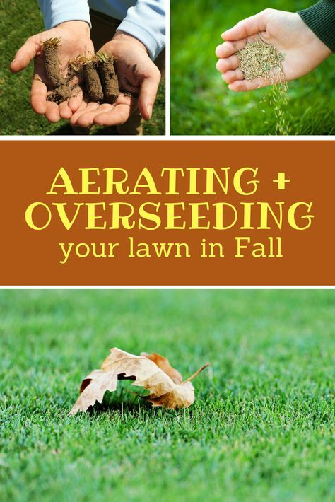 To Maximize The Benefits Both Services Have To Offer At Once Combining A Core Aeration With Overseeding Is Overseeding Overseeding Lawn Fall Lawn Maintenance
