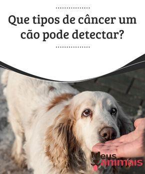 Que Tipos De Cancer Um Cao Pode Detectar Caes Animais E Animais