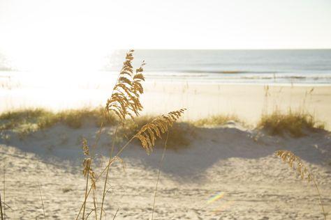 Sea oats on the beach at Palmetto Dunes Oceanfront Resort, Hilton Head Island