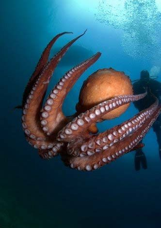 صور الكائنات الحية من اعماق البحار و المحيطات اخبار العراق Beautiful Sea Creatures Ocean Animals Animals