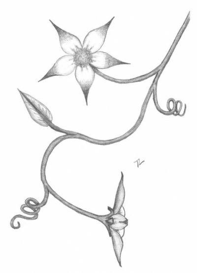 Easy Flower Drawings In Pencil Pencil Drawings Of Flowers