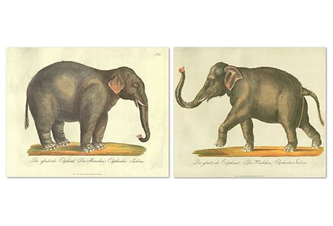 Carl Brodtmann lithographs