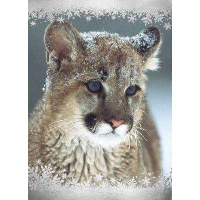National Wildlife Christmas Cards 2021 14 Wildlife Holiday Cards Ideas