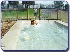 Imparra Pet Motel Dog Kennels Resort Rooms Luxury Cat Suites Boarding Kenn Boarding Cat Dog Imparra Kenn Kennels Luxury Luxurydogkenneloutdo In 2020