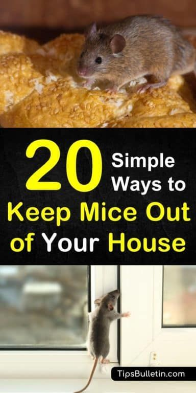 20 Simple Ways to Keep Mice Out of Your House