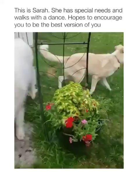 #monkoodog #smartdog #puppielove #puppies #puppiesoftheday #puppiesdaily #puppieslove #dogsoftheday #mydog #dogs #cutedogs #puppylove  credit:@animalvdos