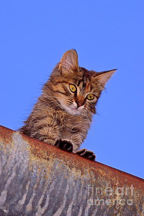 Feline Surveillance From Above In 2020 Grey Tabby Kittens Cat