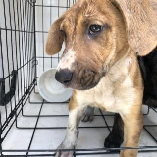 Www Petharbor Com Animal Search All Humane Society Animal Shelter Animals