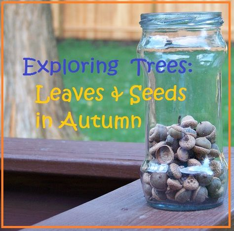 Exploring Trees: Leaves & Seeds in Autumn -- nature, science and art activities for Fall!