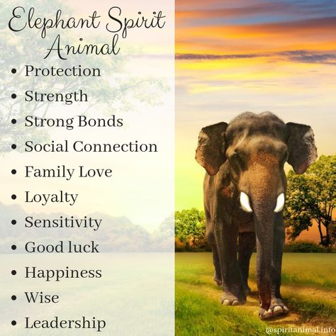 What is the meaning of the Elephant? This animal totem is primarily associated with luck, our self-knowledge, family life, nurturing others and ourselves and tapping into the divine feminine wisdom. Elephant Spirit Animal, Elephant Quotes, Elephant Facts, Elephant Love, Elephant Tattoos, My Spirit Animal, Giraffe, Quotes About Elephants, Animal Meanings