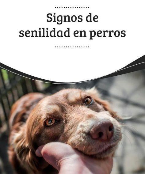 86 Ideas De Perros En 2021 Perros Cosas Para Perros Mascotas