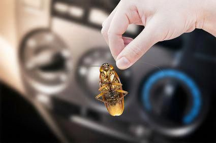 Critters That Could Be Moving From Your House To Your Car