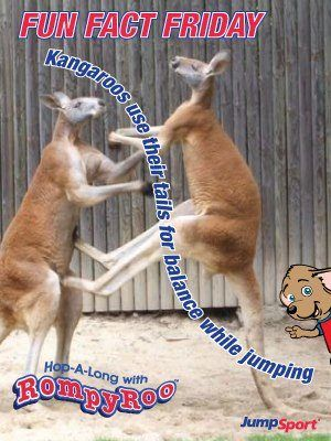 RompyRoo is at it again- learning about what makes Kangaroos tick- see the original posts on our RompyRoo FB page and tune into fun fact Fridays. ;) https://www.facebook.com/photo.php?fbid=235379056584992=a.128711597251739.20952.122647634524802=1