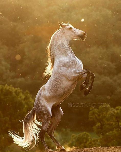 TOP HORSES BREEDS