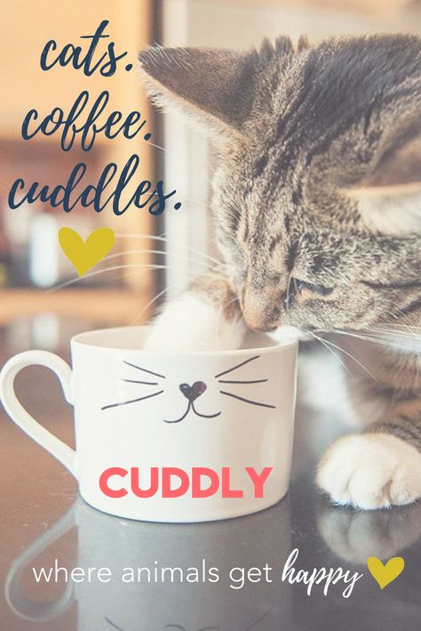 CUDDLY is a crowdfunding platform that enables animal-welfare organizations to create fundraising campaigns and find new donors, while also connecting potential adopters with their future pets.