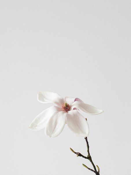 Pin By The Tint Design On Wallpaper Flower Aesthetic Minimalist Photography Beautiful Flowers