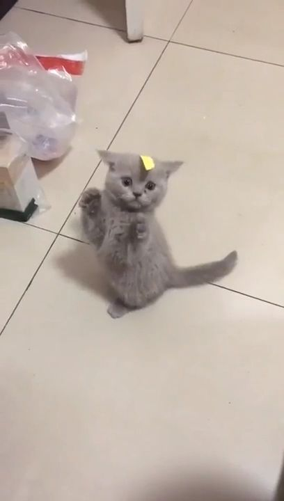 Cute Kitten Is Confused by it's owners prank 😻 #cute #kittens #cats #kitten #kitty #catlovers #funny